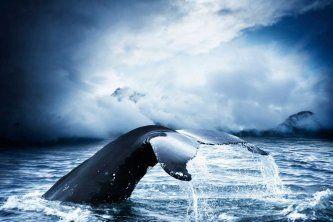 La Mecque mondiale pour l'observation des baleines