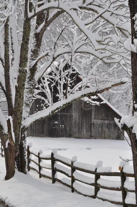 weathered barn & snow-covered trees