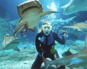 dive with the sharks #airnzsunshine