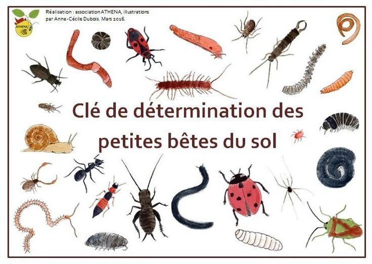 Clé de détermination des bêtes du sol                              …