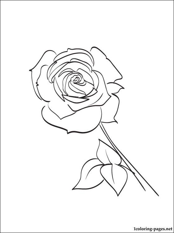 tea rose coloring pages - photo#7
