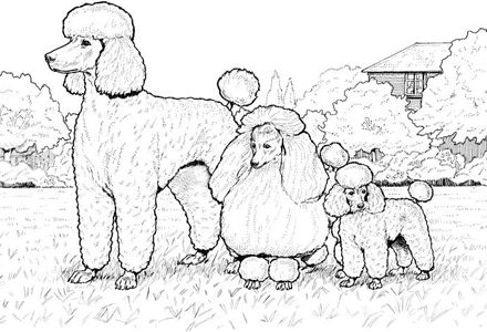 Dog Coloring Pages By Yuckles Dog Coloring Page Poodle Drawing Cute Coloring Pages