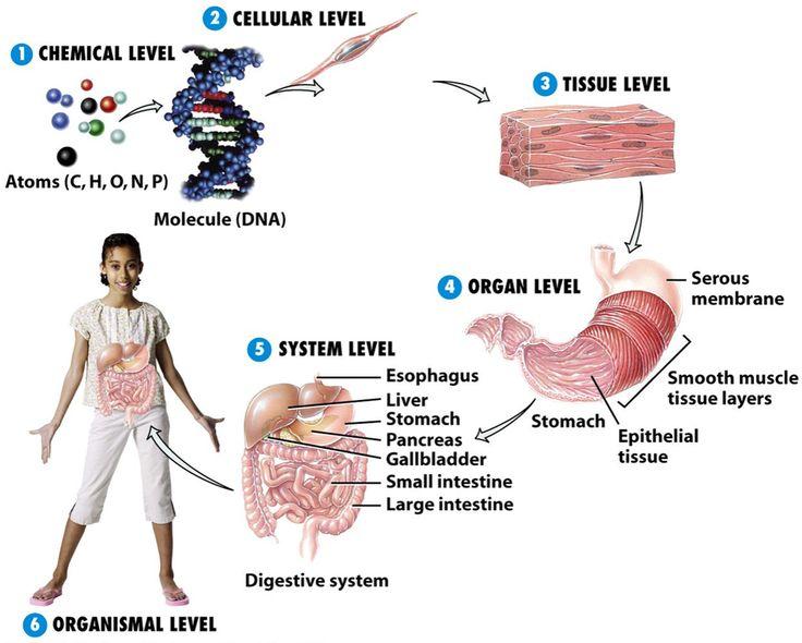 Vivix membantu melambatkan dan melindungi DNA sel tubuh kita dan melambatkan proses tersebut. Vivix sesuai diambil oleh mereka yang selesai menjalani rawatan pemulihan kanser, misalnya kemoterapi, …