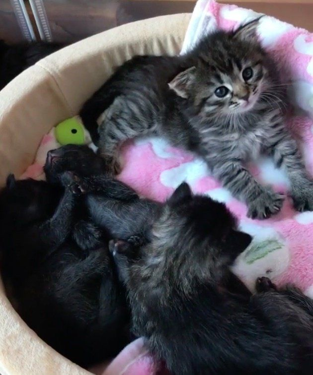 Woman Rescues Kitten Born Special While Others Decided To Give Up Love Meow Kitten Rescue Kitten Rescue Stories Cat Care