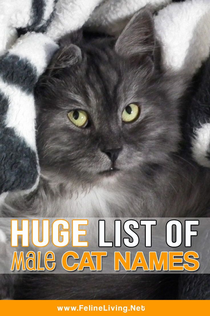 Huge List Of Male Cat Names For Your Cat Cat Names Kitten