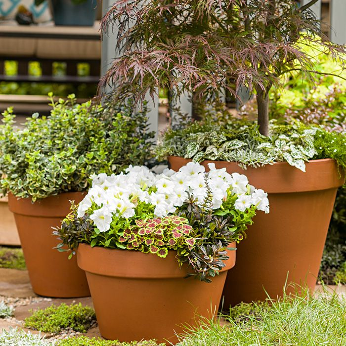 10+ Images About Gardening Tips On Pinterest