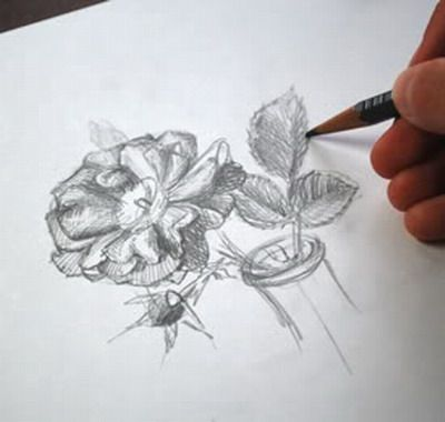 Flower Drawings in Pencil - how to draw flowers using pencil
