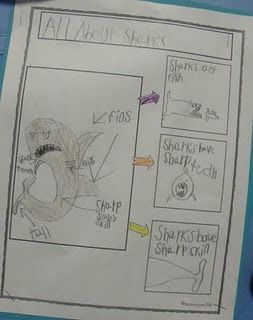 """This would go great with out """"All About"""" Posters in Writers Workshop - Draw and label animal then list 3 facts"""