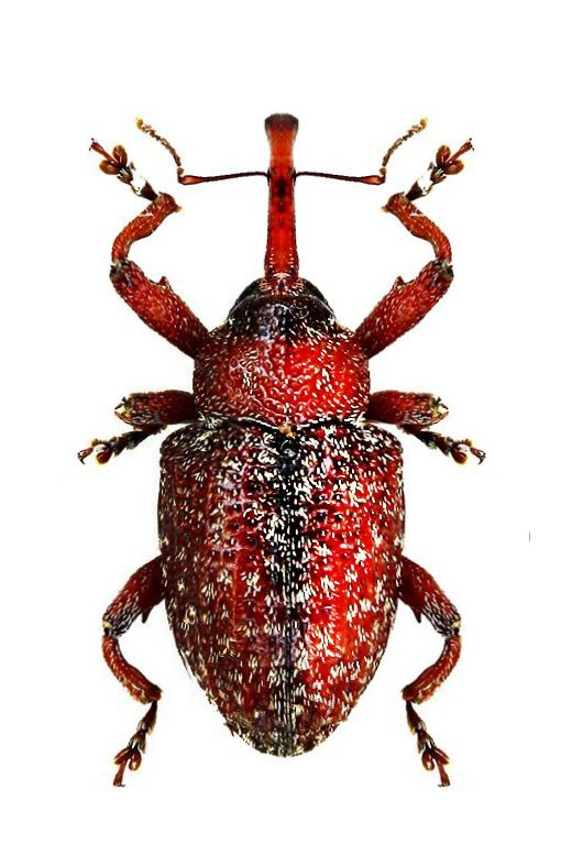 10 Monster Bugs Plucked Straight from your Nightmares