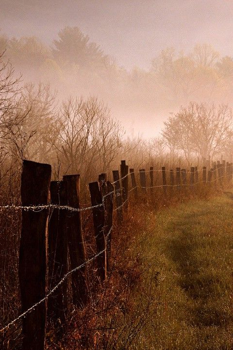 I like fences especially picket fences but I grew up with a lot of old fences and they bring back good childhood memories.