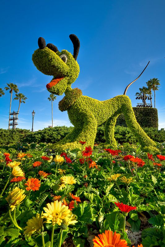 Epcot - Who Let The Dog Out? by SpreadTheMagic, via Flickr    LOVE PLUTO!  hmmm...I think I will try mickey topiary first...he's easier