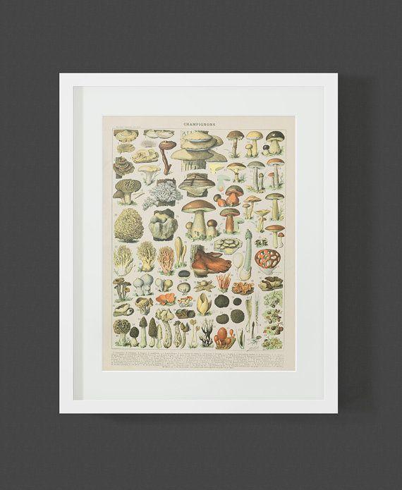 Mushroom Print Vintage Larousse Book Plate Fungi Wall Art Botanical Science