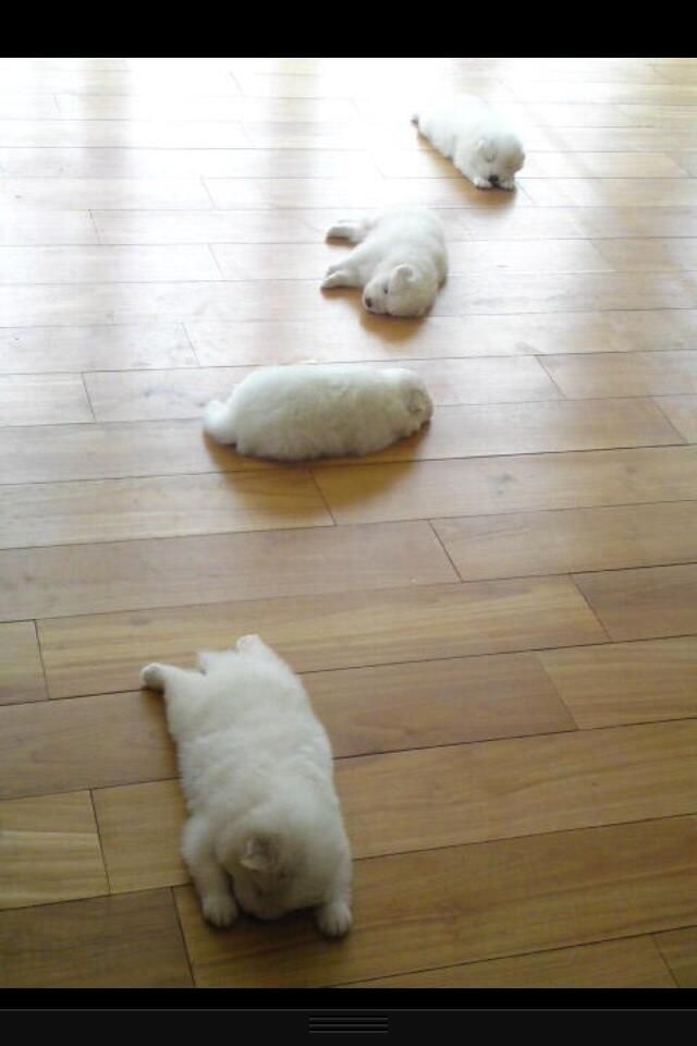 FAT FLUFFY PUPPIES