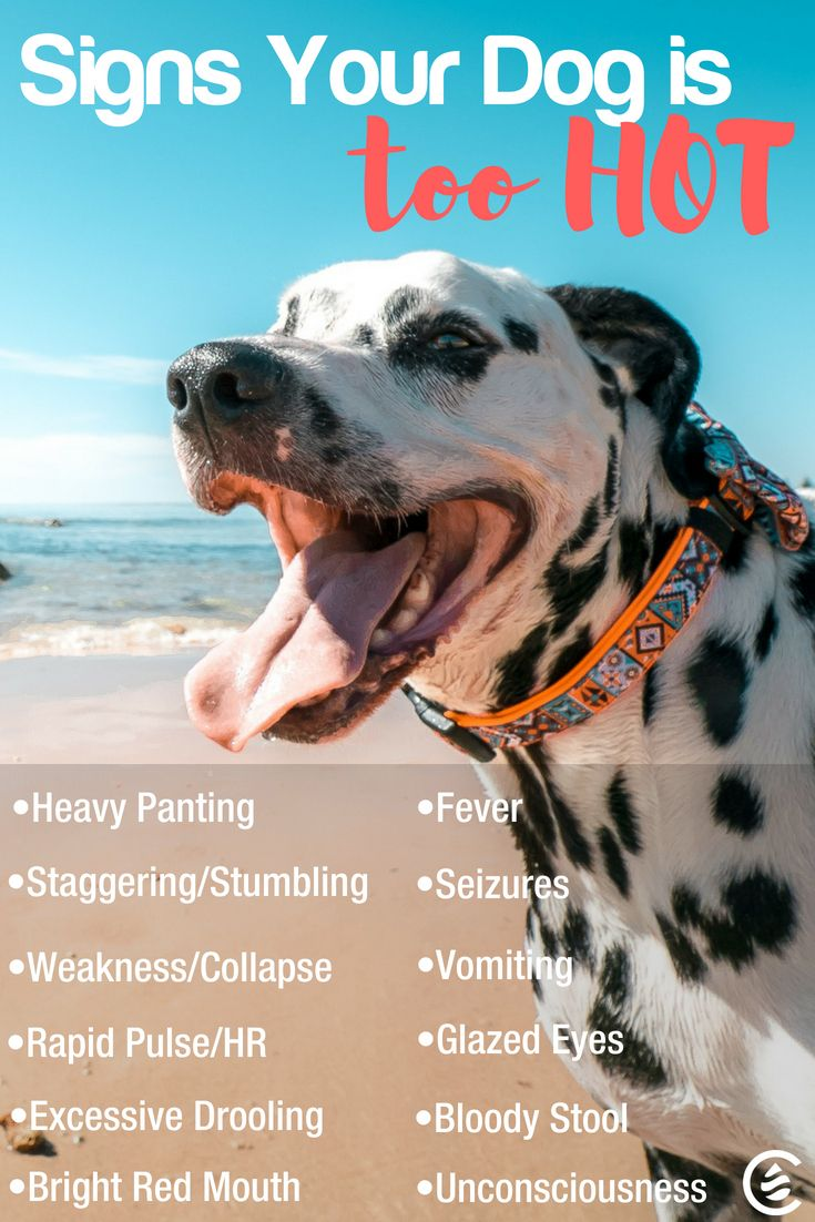 7 Tips For Running With Your Dog Cedarcide In 2020 Dog Clinic Pet Clinic Dogs