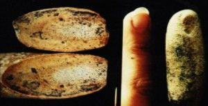 Καταρρίπτεται – Ανθρώπινο Δάχτυλο 100.000.000 ετών