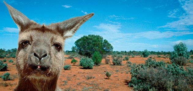 ADELEAIDE: Kangaroo Island for kangaroos, koalas, and wallabys