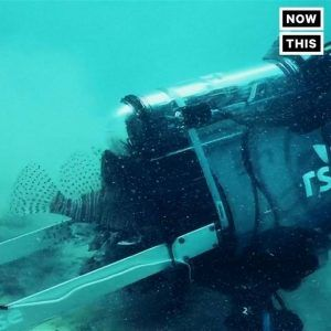 This robot is designed to capture a fish thats wrecking the ecosystemThis robot is designed to hunt #news #alternativenews