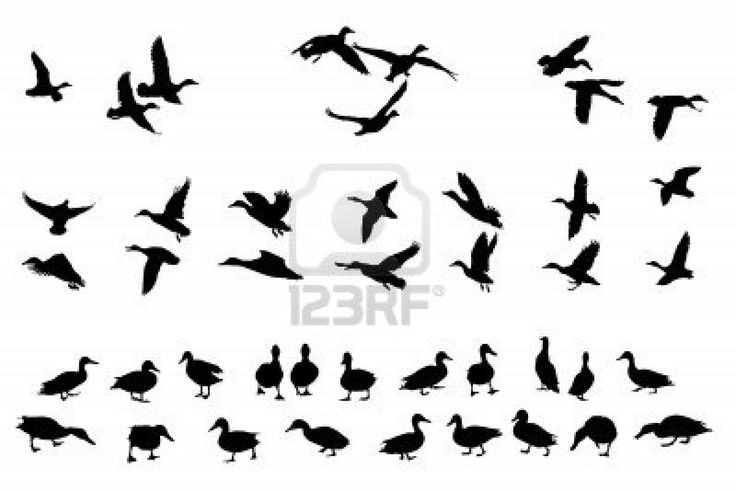 collection de canard colvert silhouettes pour les concepteurs Banque d'images - 4368750
