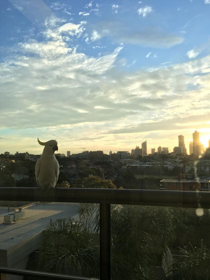 8 desks for rent in Edgecliff, New South Wales, 2027. Just $690 per month | Rubberdesk The Airbnb of Office Space