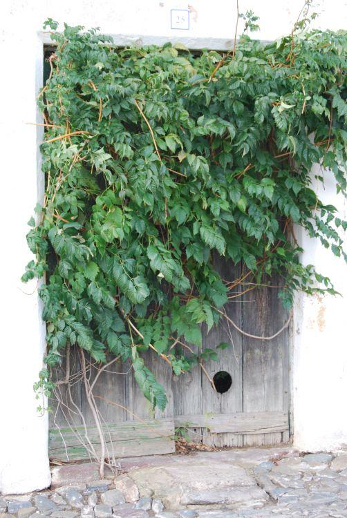 alentejo verdejante | Fotografia de Teresa mourao | Olhares.com