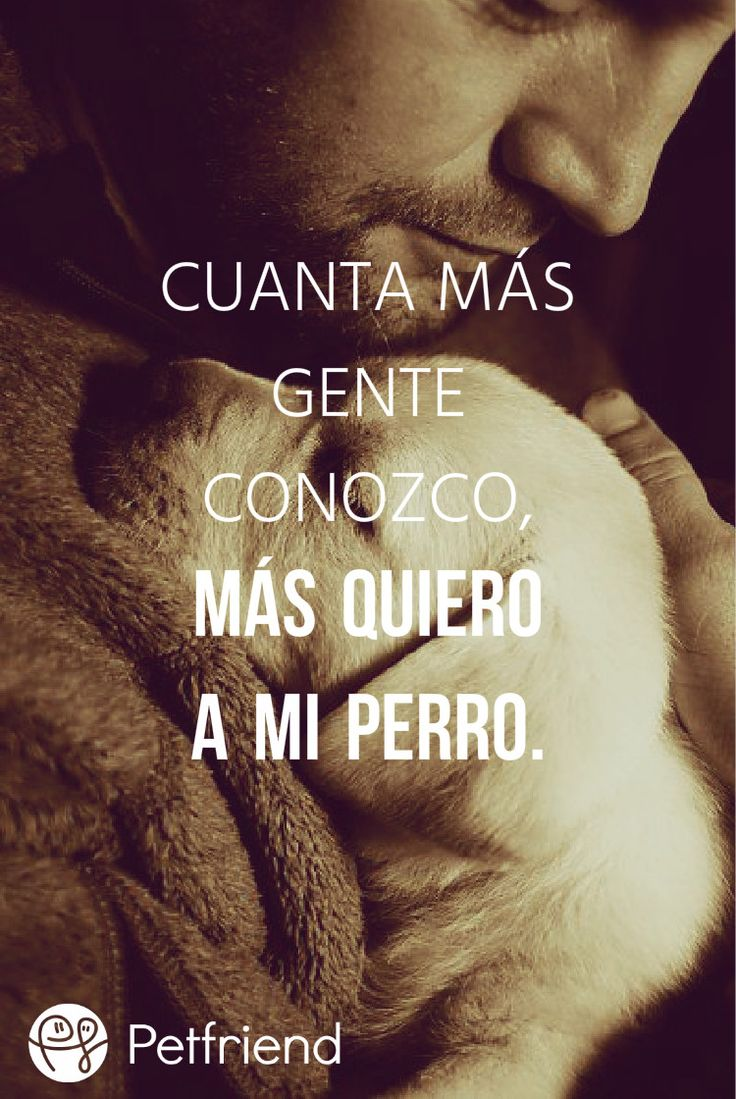 best perros images on pinterest dog cat fluffy pets and puppys