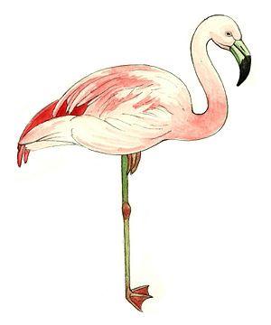 lawn flamingo outline - photo #24
