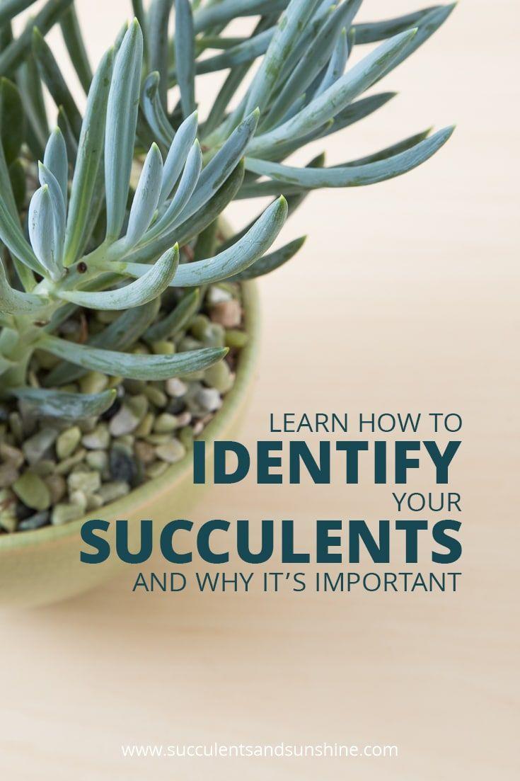 234 Best Indoor Succulents Images On Pinterest Indoor