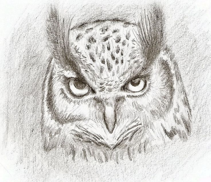 8 awesome easy owl drawings in pencil images
