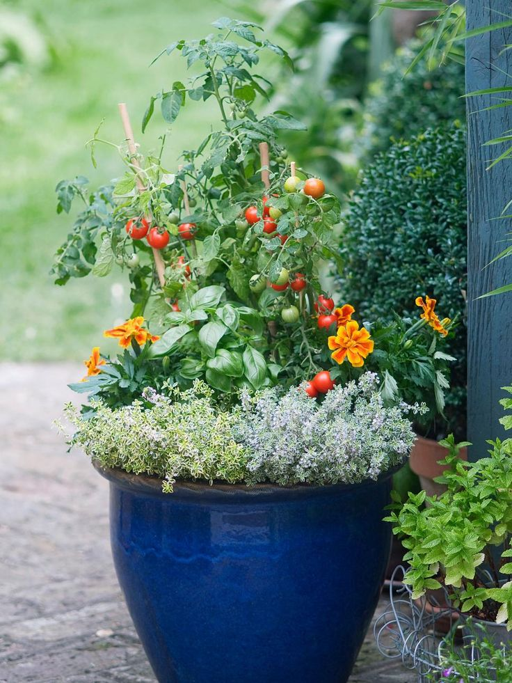 Planting taller ve ables like tomatoes with lower growing herbs and flowers will encourage