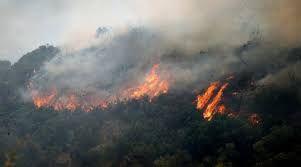 Read article about Φωτιά σε δασική έκταση στην περιοχή Αμπέλια Αγρινίου on tromero