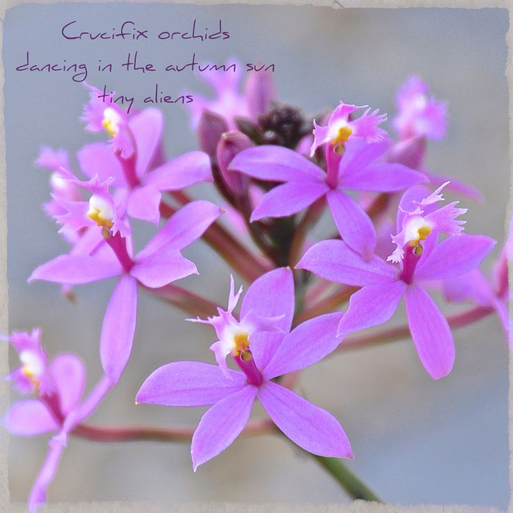 Love these easy to care for orchids.  They make autumn something to look forward to