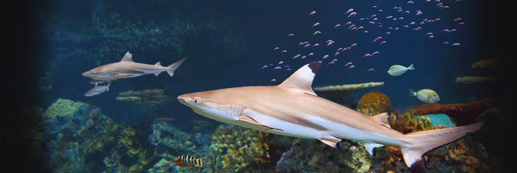 Национальный аквариум   Blacktip Риф