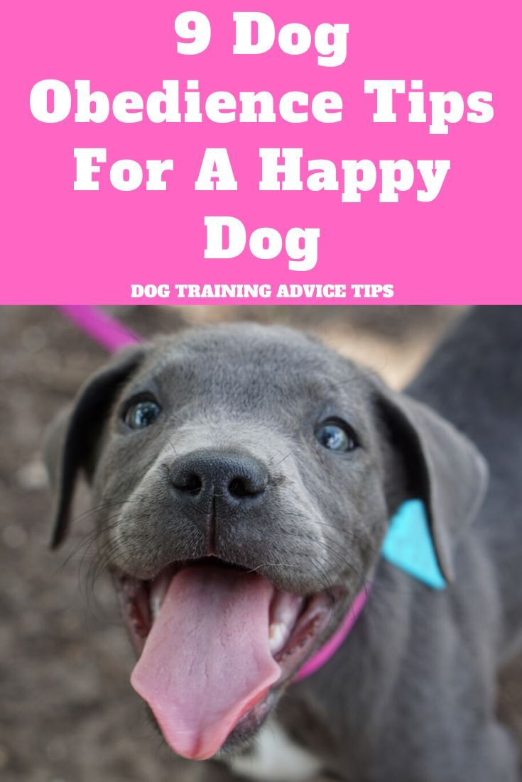 9 Dog Obedience Tips For A Happy Dog Happy Dogs Puppy Obedience