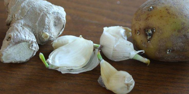 Hvitløk, potet og ingefær som spirer, kan plantes i potter og gi ny deilig mat.