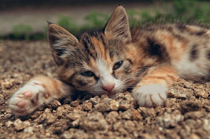 Lazy kitten by Roman Kozhukhov on 500px