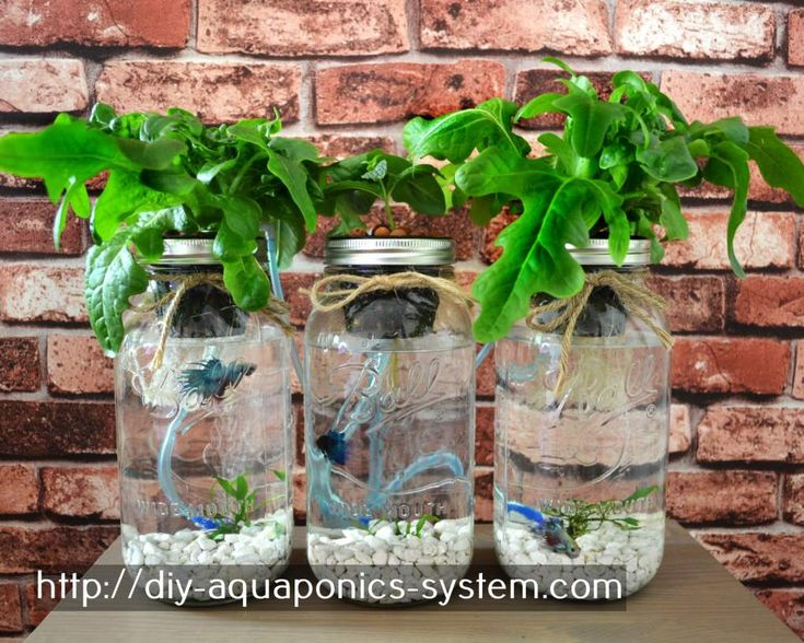 Best 25 used greenhouse for sale ideas on pinterest diy for Aquaponics fish for sale