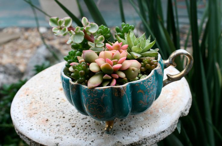 Succulents Planted in Teal and Gold Rustic Teacup. $22.00, via Etsy.