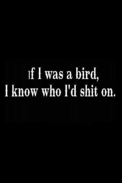 Being a bird would be fun...... As in shitting on people