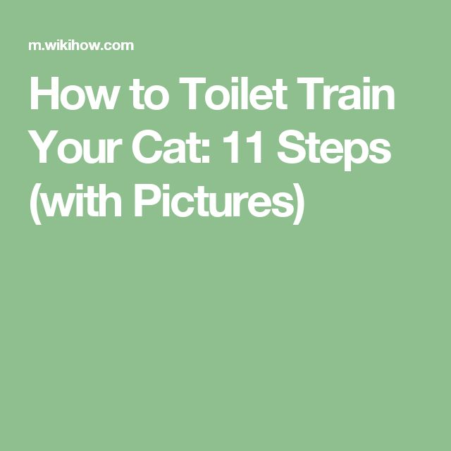 how to toilet train your cat