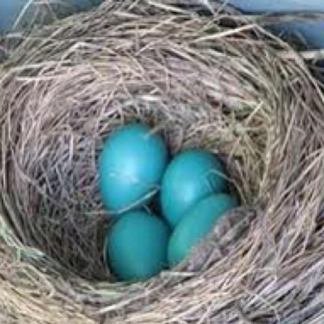 Blues Egg  Menus