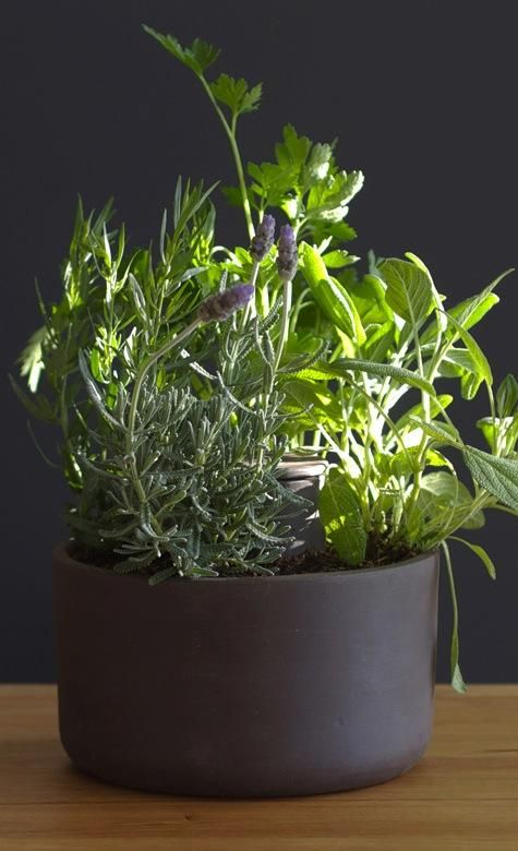 self-watering terracotta planter