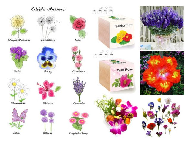 """Edible Flowers For Summer Balcony & Kitchen"" by gothicvamperstein on Polyvore featuring interior, interiors, interior design, home, home decor, interior decorating, kitchen and Flowers"