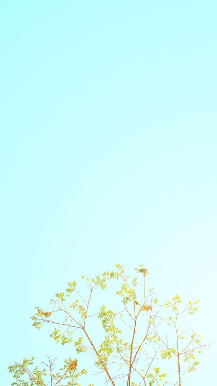 Minimalist Aesthetic Spring Wallpaper Iphone