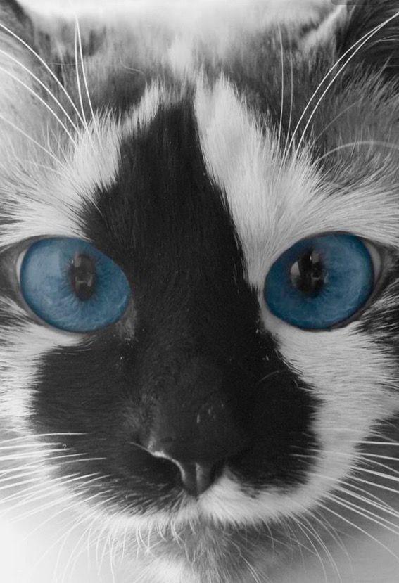 Kitten Eye Vs Cat Eye Makeup