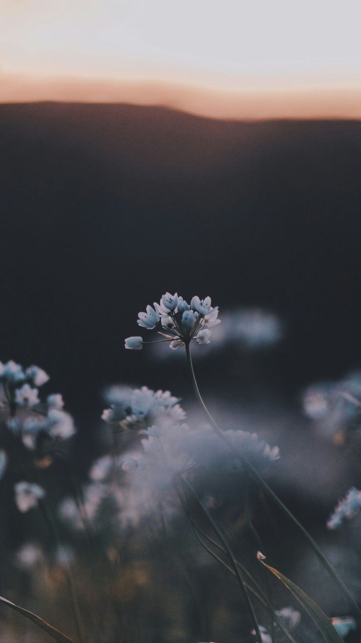 Baby Blooms I Have This Thing With Flowers Flowers Floral Flora Fauna Arrangements Photograph Nature Photography Tumblr Wallpaper Landscape Photography