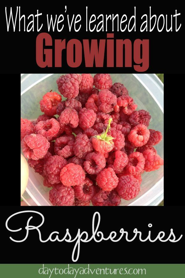 how to start a raspberry farm