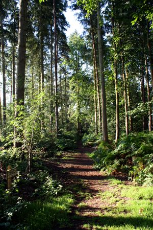 This is a forest near Sandringham, Norfolk by Mandy Jones from thephotographerblog.com