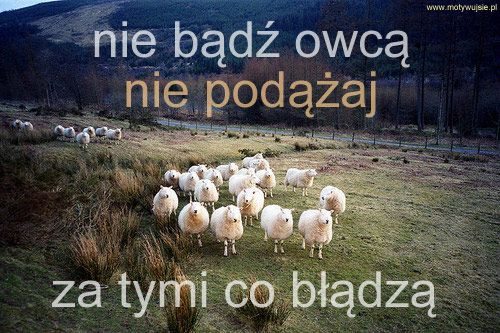 Z całym szacunkiem dla owiec