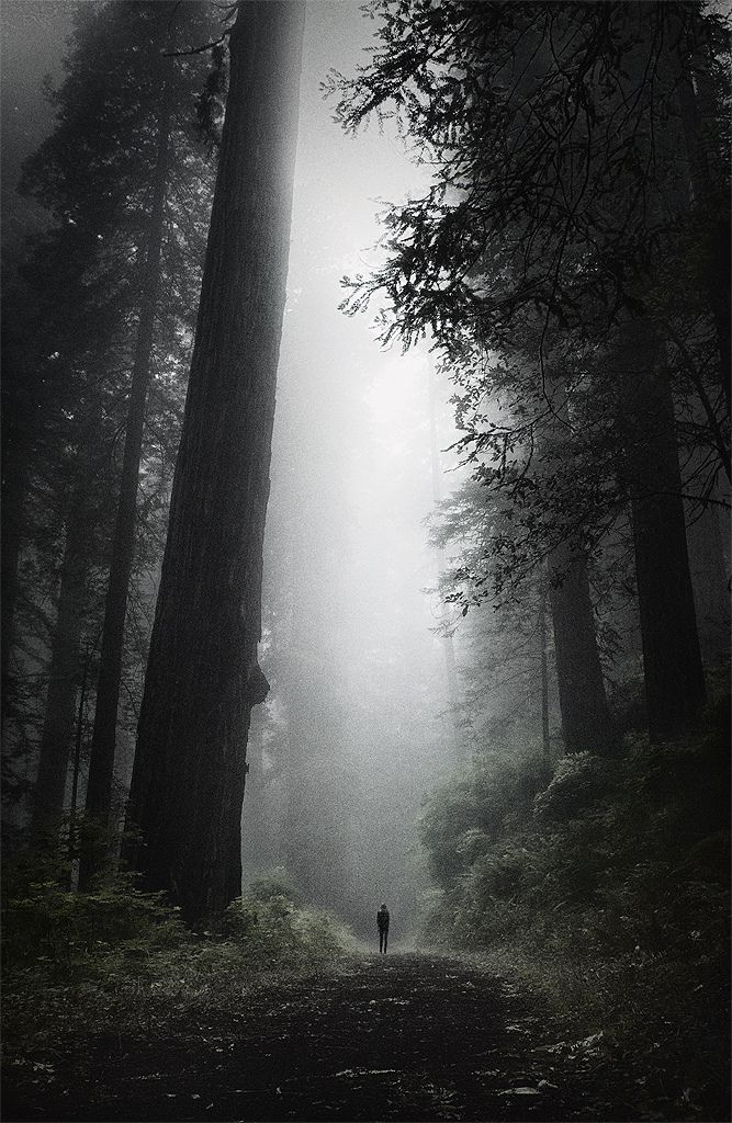 Lost in the Old Growth by Peter Jamus on Flickr  )