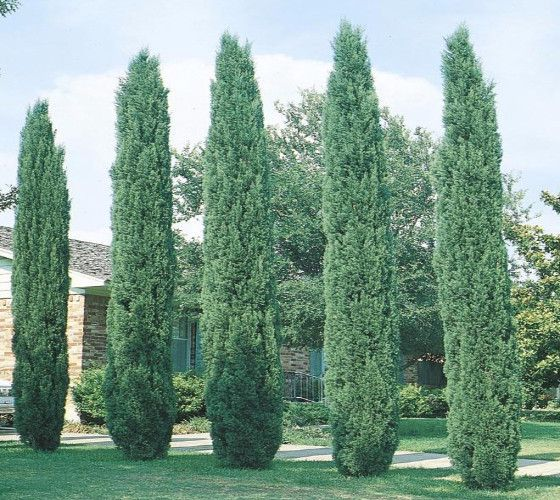 Tuscan House Style With Front Walkway And Italian Cypress: Best 25+ Driveway Landscaping Ideas On Pinterest